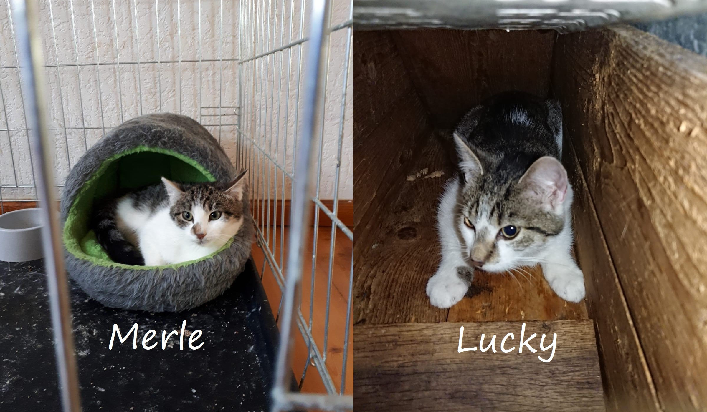 Neuzugänge Katze Merle und Kater Lucky