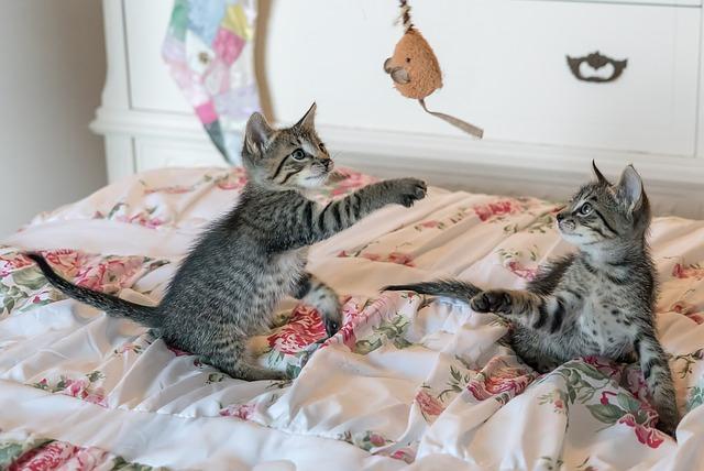 Junge Katzen am Spielen