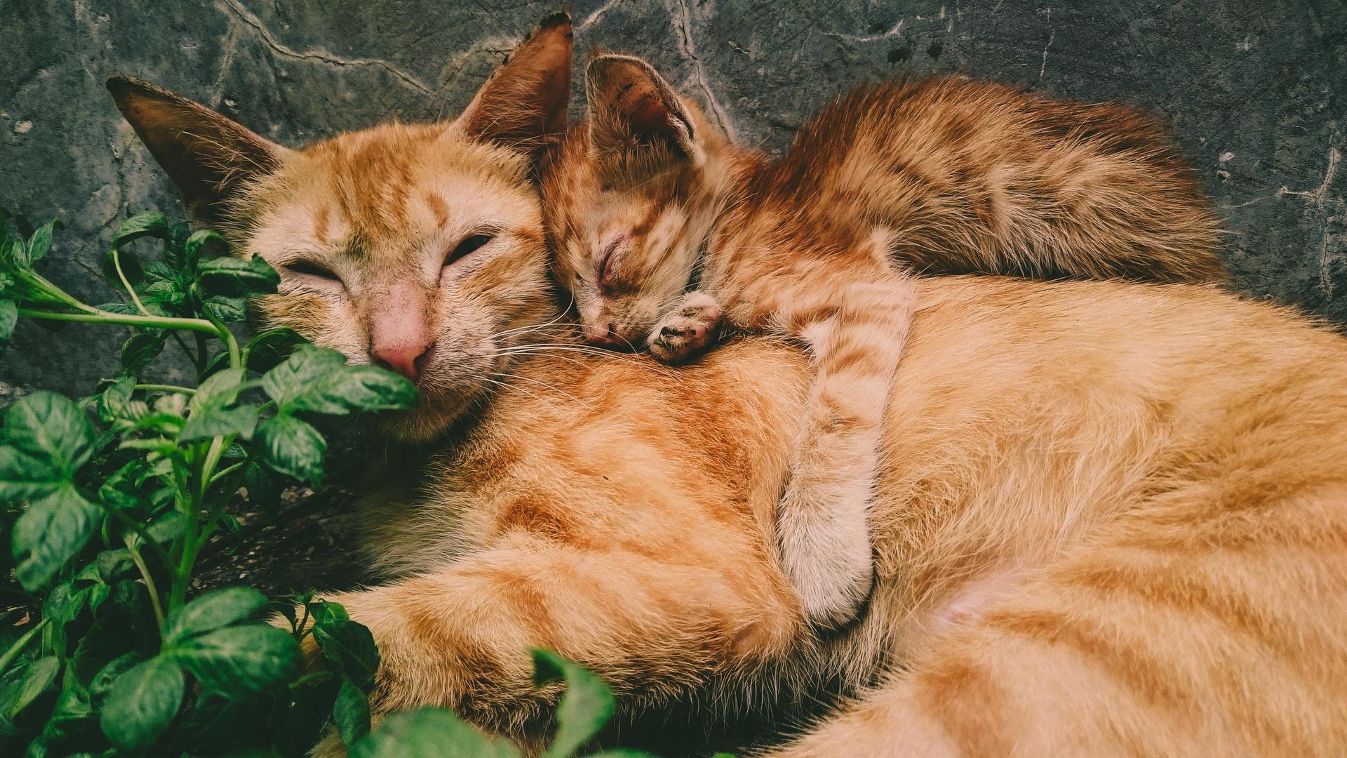 Tipps und Tricks für die Zusammenführung von Tierschutzkatzen